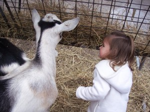 Local news: Goat does NOT eat child's jacket